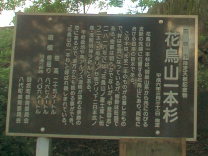 120708sugi02hanatoriyama.jpg