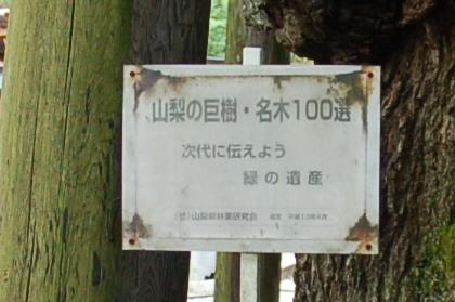 120714sakura03unpoji.jpg