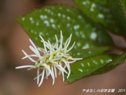 150418hitorishizuka03.jpg
