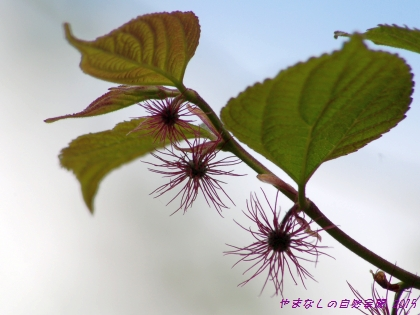 150504himekouzo02.jpg