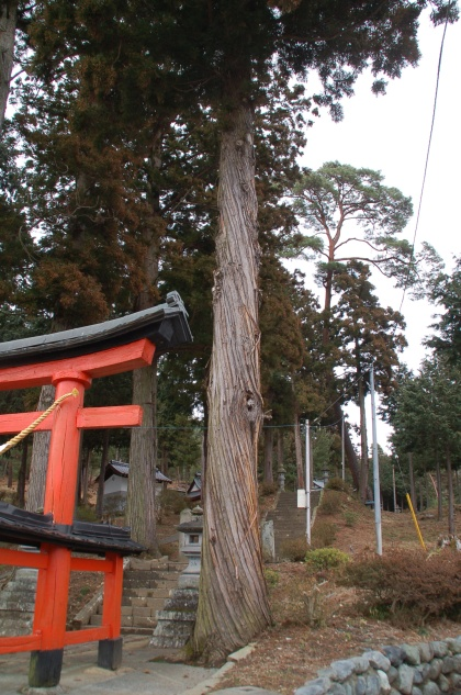 120225mochinoki01.jpg
