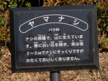 121124yamanashi02.jpg