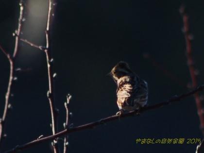 150103kashiradaka01.jpg