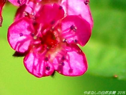 150810shimotsuke01.jpg